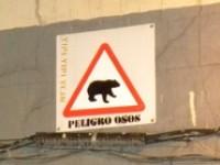 peligro osos chueca